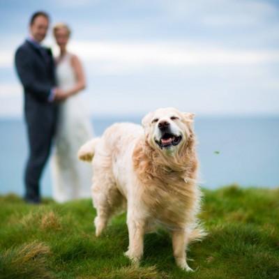 Carnmarth Hotel, a dog friendly hotel and wedding venue in Cornwall