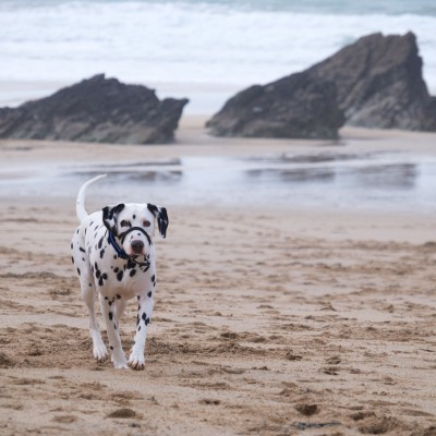 Lusty Glaze, a dog friendly beach in Cornwall