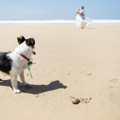 Dog friendly weddings at Lusty Glaze Beach in Cornwall