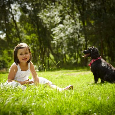 Dog friendly breaks with Forest Holidays