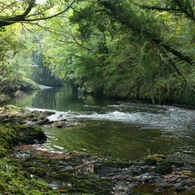 River Lyd - dog friendly walks in Devon