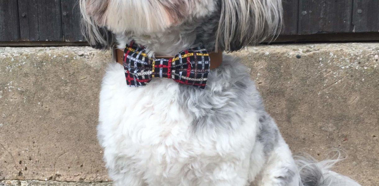 The Distinguished Dog Conpany