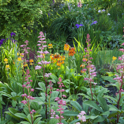 Summer flowers at Hidden Valley Gardens